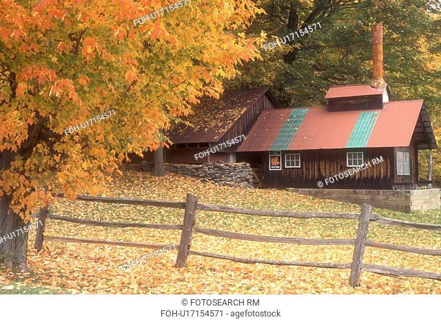 sugarhouse, maple tree, fall, Middletown Springs, VT, Vermont, A sugar shack with a red roof is surrounded by colorful foliage in autumn in Middletown Springs
