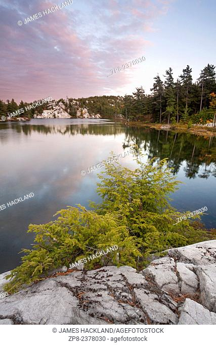 A small bush lines the edge of white quartzite rock overlooking a lake in Killarney Provincial Park, Ontario, Canada
