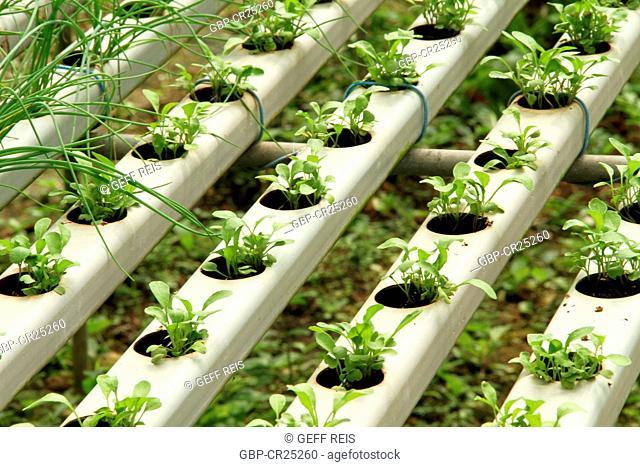 Agriculture, hydroponic, São Paulo, Brazil