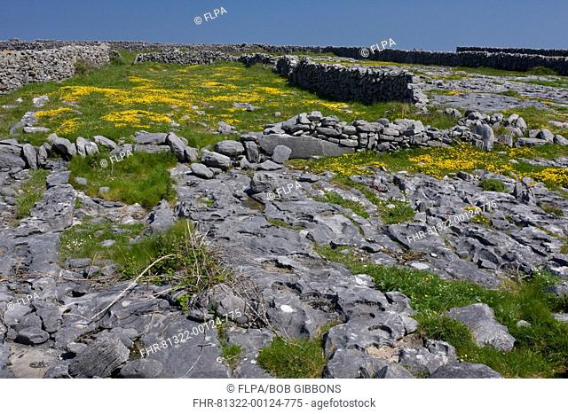 Limestone pavement and drystone walled fields, Inisheer Inis Oirr, The Burren, County Clare, Ireland, spring