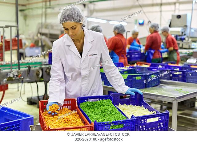 Asparagus, carrots and peas, Dull vegetable stew. Production line of canned vegetables and legumes, Canning Industry, Agri-food, Villafranca, Navarre , Spain