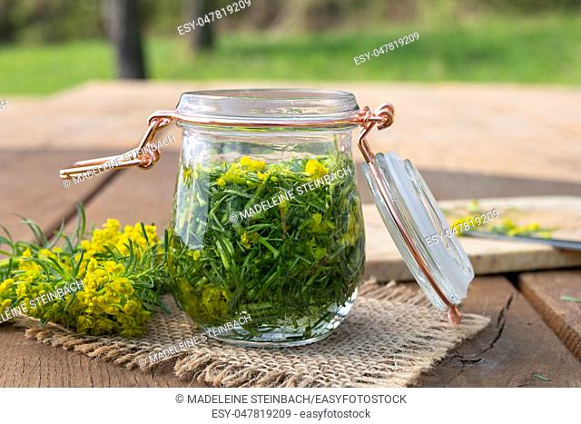 Preparation of herbal tincture from cypress spurge in a jar