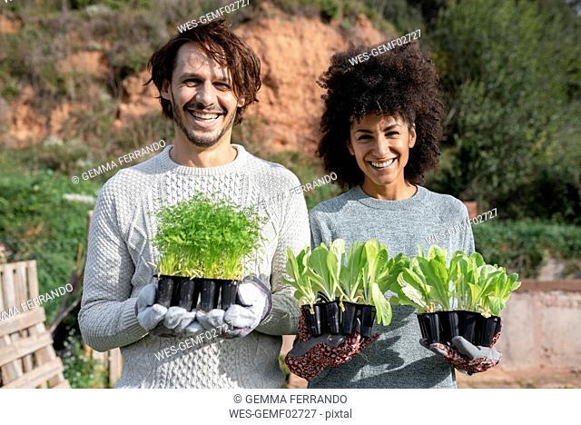 Happy couple holding lettuce seedlings in a vegetable garden