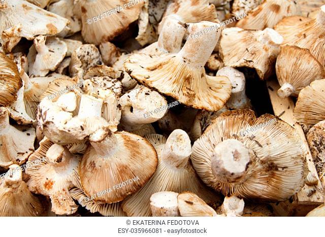 Fresh mushrooms on a farmers market close up
