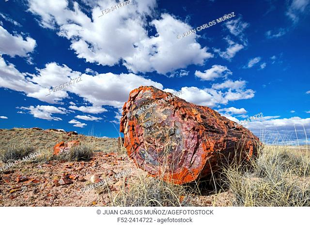 Petrified wood, Petrified Forest National Park, Arizona, USA, America