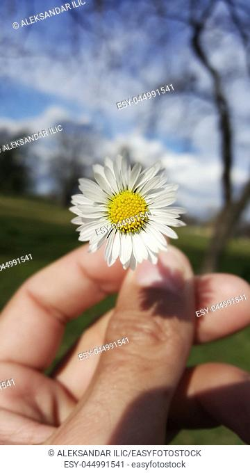 Flower Held In The Hand With Nature Background