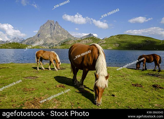 horses front Midi d Ossau, Gentau lake, Ayous lakes tour, Pyrenees National Park, Pyrenees Atlantiques, France