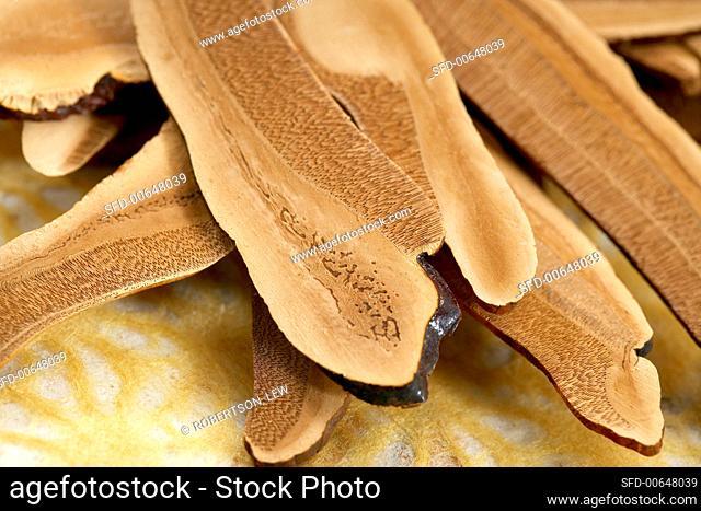 Ganoderma Lucidum (Reishi Mushroom) Close Up