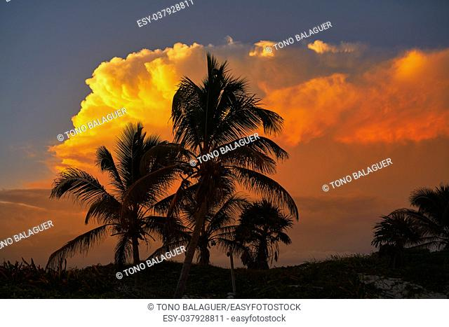 Sunset orange sky coconut palm trees in Caribbean Riviera Maya