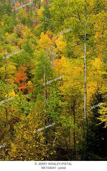 Autumn, Citico Creek, Cherokee National Forest, TN