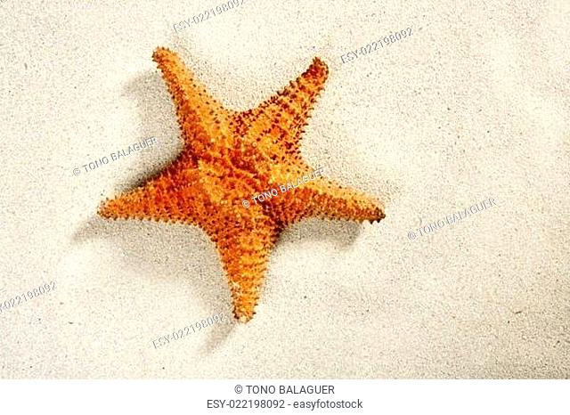 beach white sand starfish summer vacation symbol