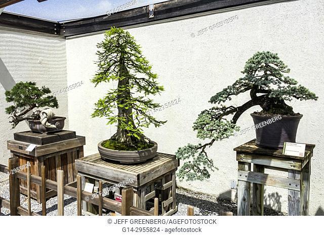 Washington DC, District of Columbia, United States National Arboretum, botanical garden, Bonsai and Penjing Museum, miniature, trees