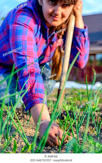 Woman weeding her vegetable patch in spring holding up a weed on display in her hand, close up selective focus view