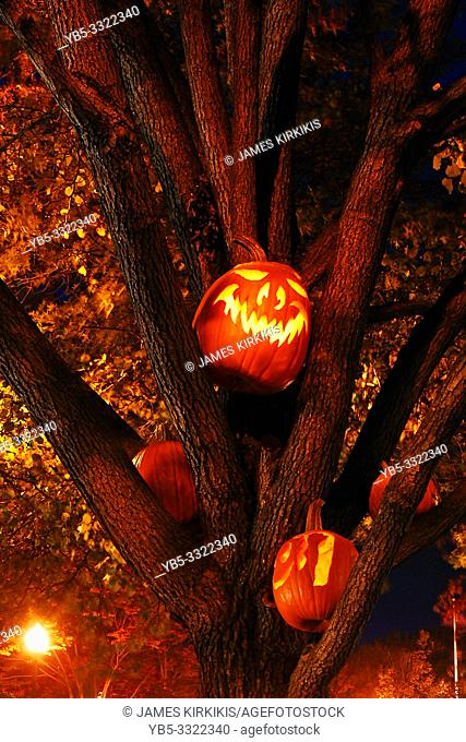 Carved pumpkins with eerie faces are placed in a tree near Halloween