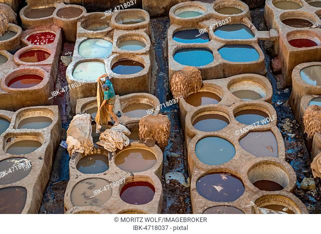 Worker dyeing leather, basin with paint, dyeing, tannery Tannerie Chouara, tanner and dyer quarter, Fes el Bali, Fez, Morocco