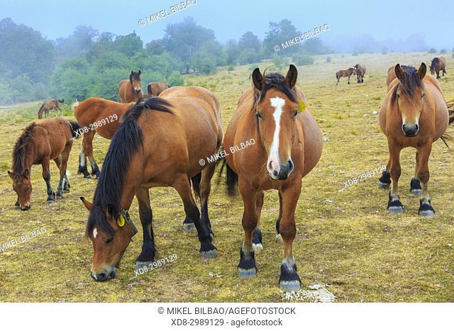 Horses on a pasture. Otsaportillo route. Urbasa-Andia Natural Park. Navarre, Spain, Europe