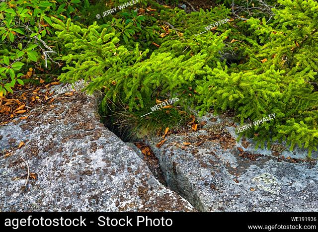 Autumn Scenery at Dolly Sods, Monongahela National Forest, WV