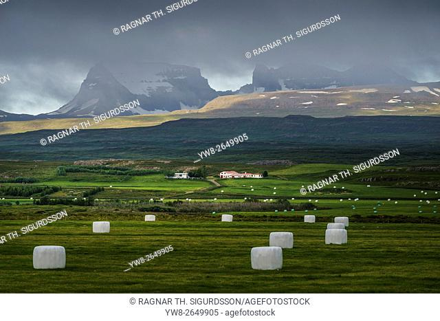 Hay bales wrapped in plastic for winter storage, farmland in Eastern Iceland
