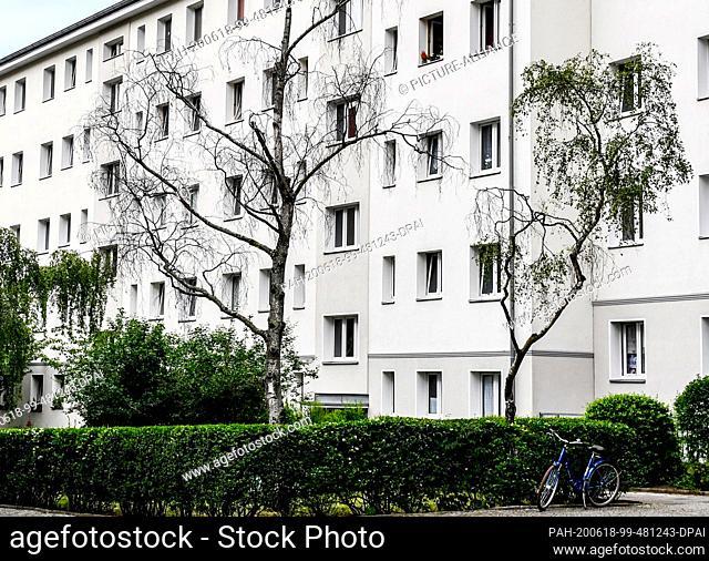18 June 2020, Berlin: A dried-out street tree in a courtyard of a residential area in Schöneberg. Photo: Jens Kalaene/dpa-Zentralbild/ZB