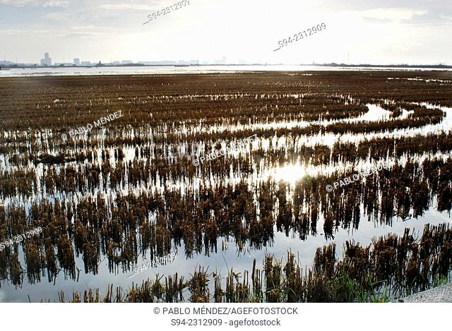 Waterfields in El Palmar, Valencia, Spain