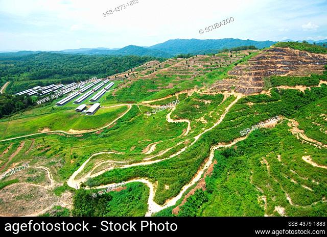 Aerial View of chicken factory sheds, Sabah State, Malaysia