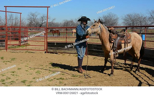 Dallas Texas Tate Ranch cowboy training 2 year old horses to put on first saddle on them for training at ranch to break them for riding  6