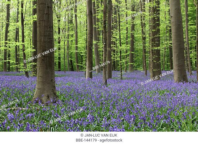 A fairy-like forest in the spring