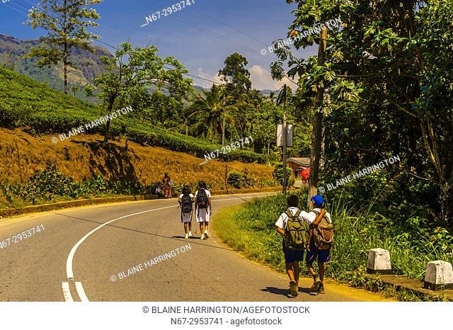 School children walk along road below tea gardens, Pusselawa, Central Province, Sri Lanka