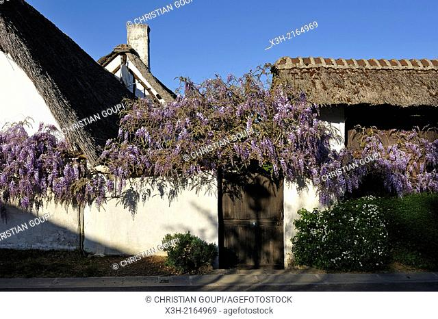 wisteria and thatched cottage, Eure-et-Loir department, Centre region, France, Europe