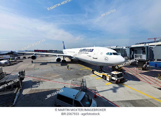 Lufthansa Airbus A340 being towed to the gate, Frankfurt, Hesse, Germany, Europe
