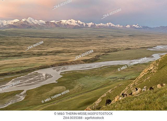 Goats grazing on a slope, Sary Jaz valley at sunrise, Issyk Kul region, Kyrgyzstan