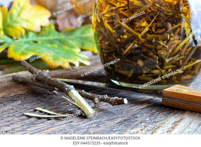 Preparation of a homemade herbal tincture from oak bark