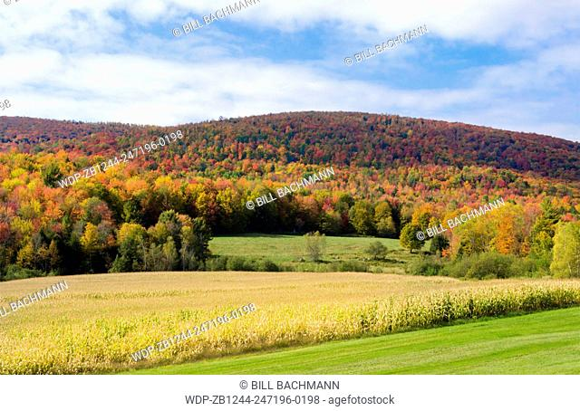 Montgomery Center Vermont fall foliage with colors in trees and farming of corn panoramics in Northern New England
