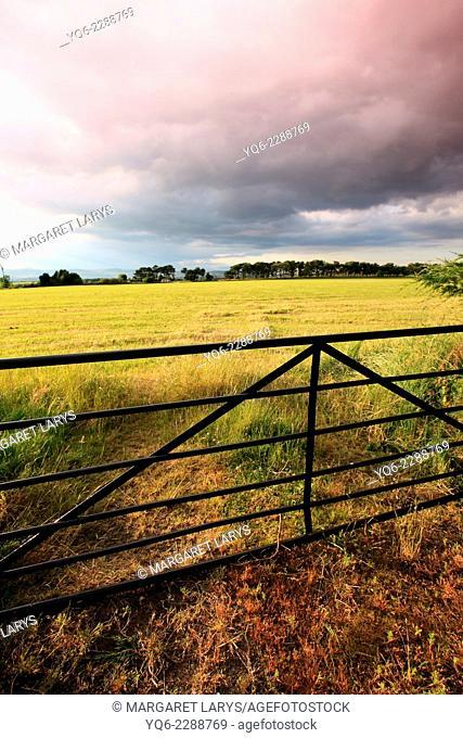 Beautiful summer fields with golden sunlight in Scotland