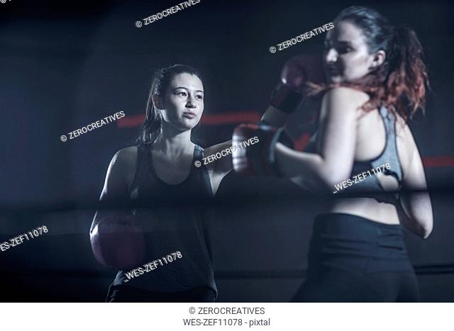 Two female boxers in ring in boxing gym