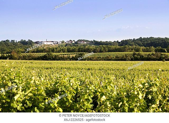 Landscape of grape vines in the Borderies region of Cognac towards Mesnac