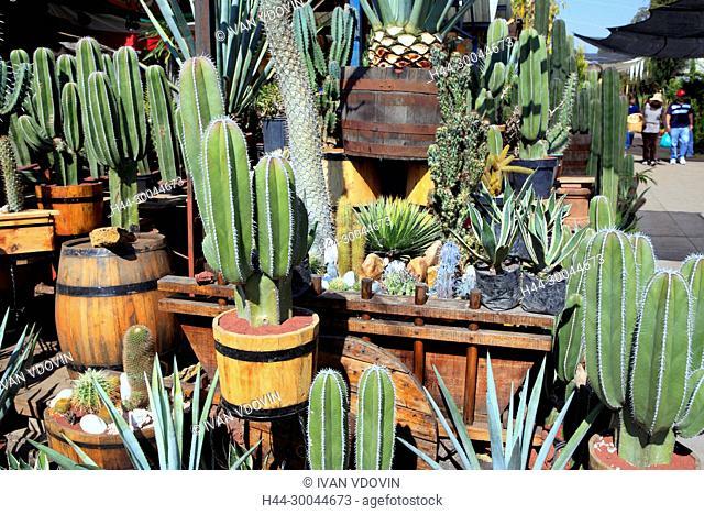 Cactuses on flower market, Cuemanco, Mexico DF, Mexico