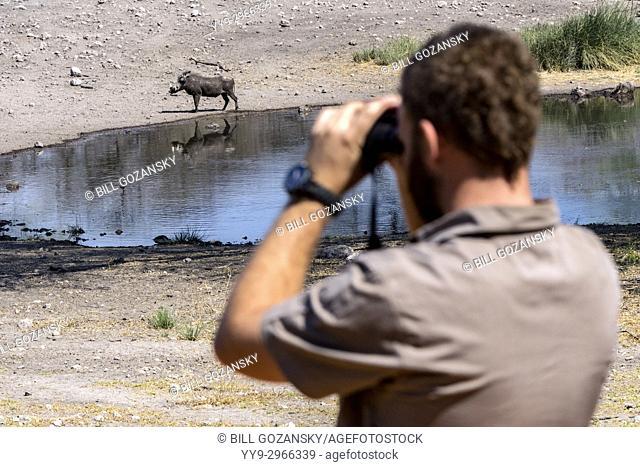 Wildlife Viewing at waterhole - Onguma Tented Camp, Onguma Game Reserve, Namibia, Africa