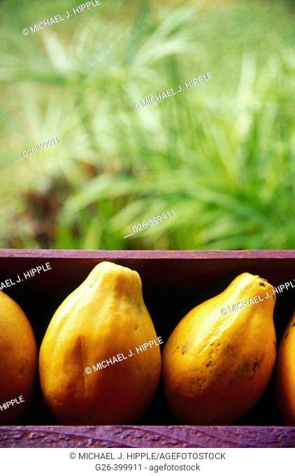 Fresh papayas for sale at roadside. Kauai Island. Hawaii. USA