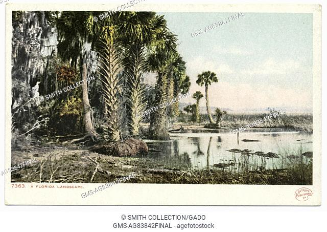 Postcard of palm trees growing from a marshy landscape, Florida, 1914. From the New York Public Library