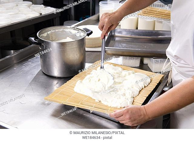 Cheesemaker puts fresh cheese on the rush for a typical process