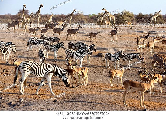 Animals congregating at Chudop Waterhole - Etosha National Park - Namibia, Africa