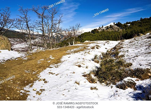 Road to the Cardoso hill  Madrid  Spain