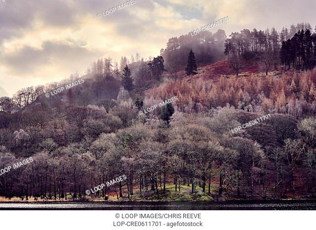 Misty trees in the morning on Rydal Water in the Lake District