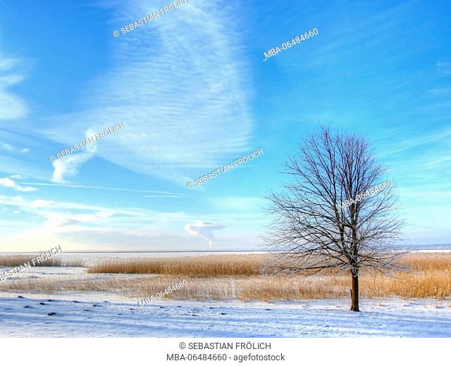More lonely with hoarfrost coated tree in the Bodden of Wustrow in winter