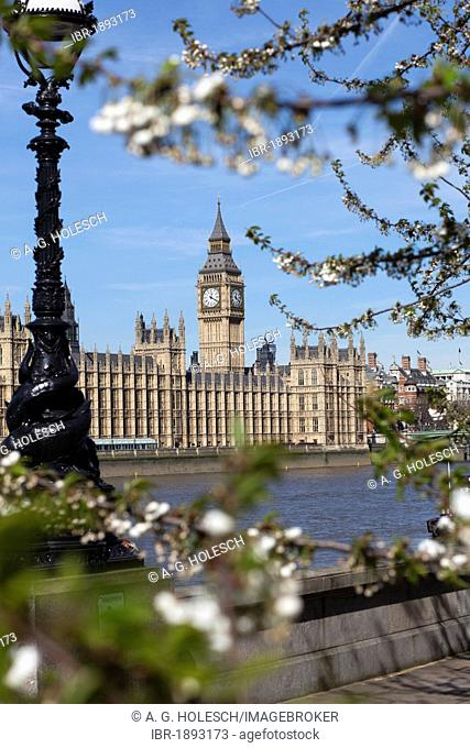 Big Ben, Houses of Parliament, spring, London, England, United Kingdom, Europe