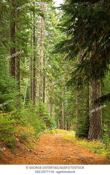 Sisi Butte Road, Mt Hood National Forest, Oregon