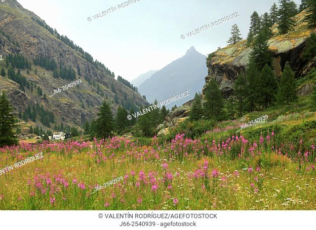 Landscape near of Pont, in the Valsavarenche valley. National park Gran Paradiso. Italy