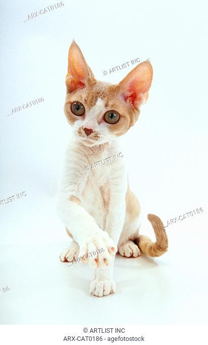 A sitting kitten stretching a leg