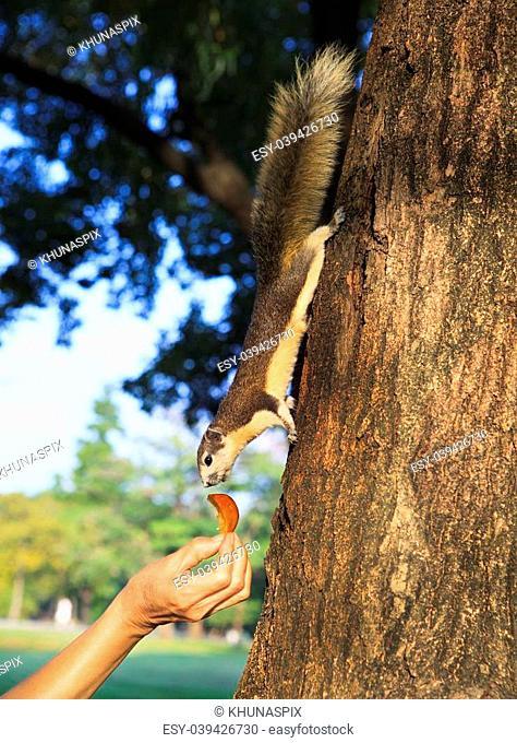 human hand feeding sone food for wild squirrel in public park